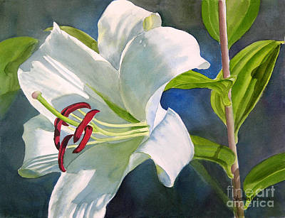 White Flowers Painting - White Oriental Lily by Sharon Freeman