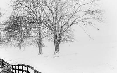 Photograph - White Out by David Waldrop