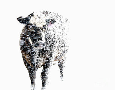 White Out Art Print by Artist Karen Barton