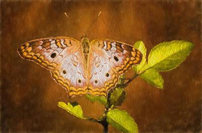 Wall Art - Photograph - White Peacock Butterfly by Martin Belan
