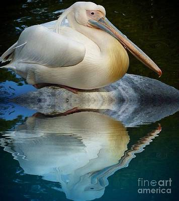 Photograph - White Pelican Reflect by Susan Garren