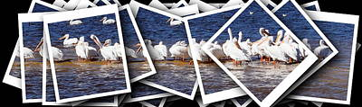 Photograph - White Pelican Stack 1 by Sheri McLeroy
