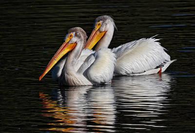 Kathleen Photograph - White Pelicans On Dark Water by Kathleen Bishop