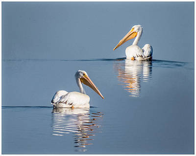White Pelicans Art Print by Patti Deters