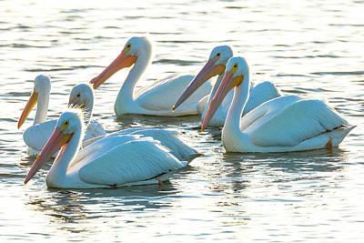 White Pelicans, Pelecanus Art Print by Maresa Pryor