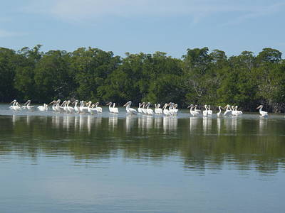 Art Print featuring the photograph White Pelicans by Robert Nickologianis