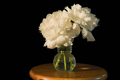 Comedian Drawings - White Peony Flowers by Keith Webber Jr