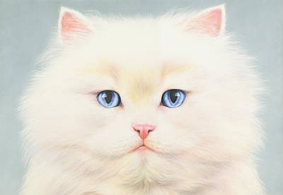 Elegant Cat Photograph - White Persian by Andrew Farley