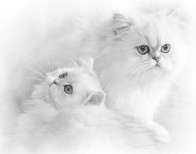 Photograph - White Persians by David and Carol Kelly