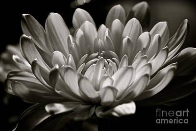Photograph - White Petals by Jill Smith