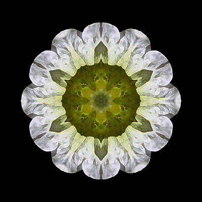 Photograph - White Petunia Iv Flower Mandala by David J Bookbinder