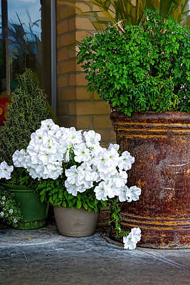 Photograph - White Petunias And Old Iron Pot by Michael Flood