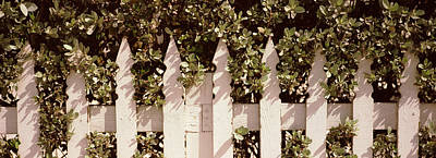 White Picket Fence Surrounded By Bushes Art Print
