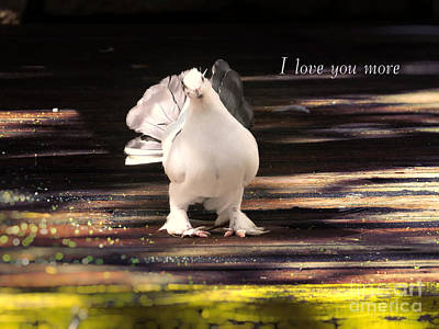 Photograph - White Pigeon Nature Photography - I Love You More by Ella Kaye Dickey