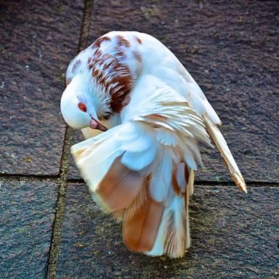Photograph - White Pigeon by Ricardo J Ruiz de Porras