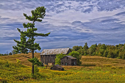White Pine And Old Barn Art Print by Gary Hall