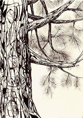 Drawing - White Pine by Andrea Carroll