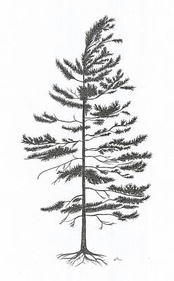 Drawing - White Pine by Andrea Currie