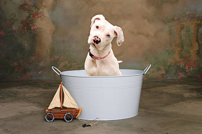Dogs Photograph - White Pitbull Puppy Portrait by James BO  Insogna