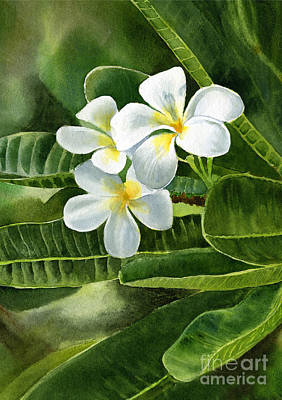 White Flowers Painting - White Plumeria Flowers by Sharon Freeman