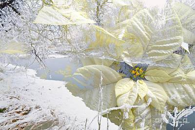 Photograph - White Poinsettias And Winter Landscape by Annie Zeno