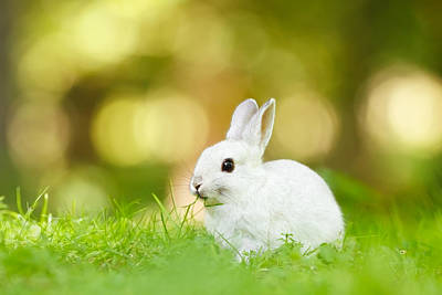 Spring Time Photograph - White Rabbit by Roeselien Raimond