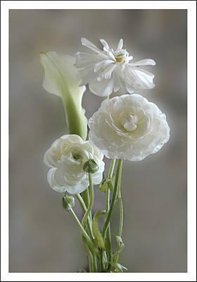 White Ranunculus  Art Print by Geraldine Alexander