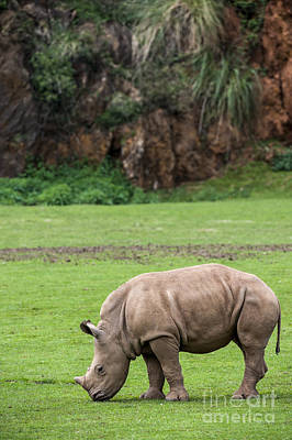 Photograph - White Rhino 14 by Arterra Picture Library