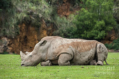 Photograph - White Rhino 16 by Arterra Picture Library