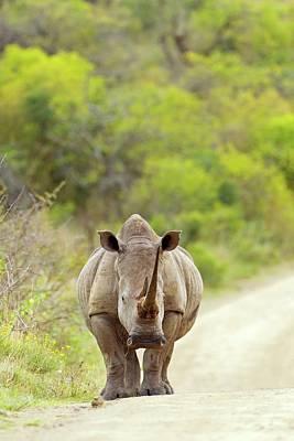 Rhinoceros Photograph - White Rhino by Bildagentur-online/mcphoto-schaef