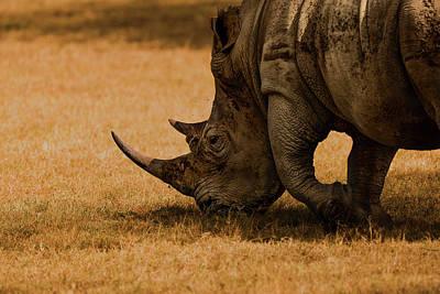 Rhino Wall Art - Photograph - White Rhino by Massimo Mei