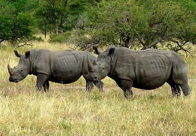 Photograph - White Rhino Pair by Ramona Johnston