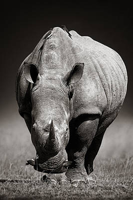 Winter Photograph - White Rhinoceros  In Due-tone by Johan Swanepoel