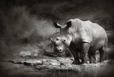 Black Stand Photograph - White Rhinoceros by Johan Swanepoel