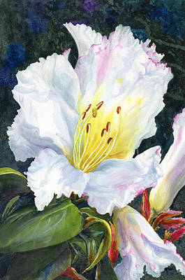 White Flowers Painting - White Rhododendrom by Karen Wright