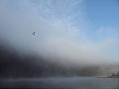 Photograph - White River Bird by Donna G Smith