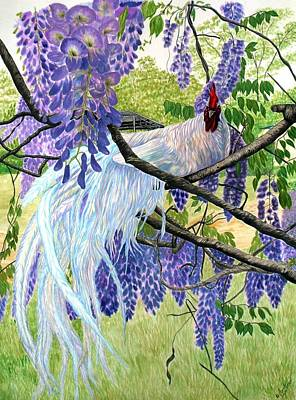 Watercolor Wisteria Painting - White Rooster In Wisteria by Amanda Hukill