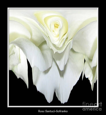 Abstract Photograph - White Rose Abstract by Rose Santuci-Sofranko