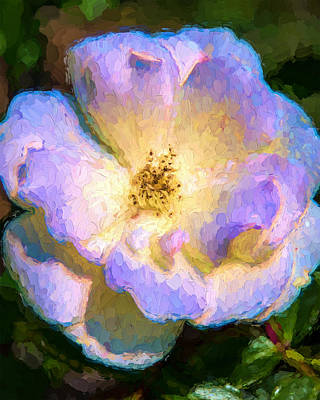 Painting - White Rose At Sunrise by Ike Krieger