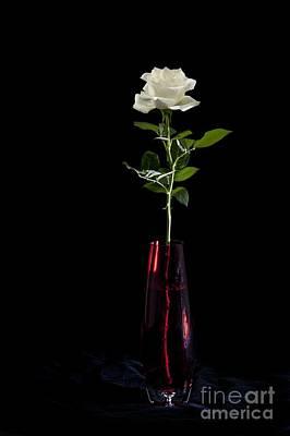 White Rose Digital Art - White Rose by Donald Davis