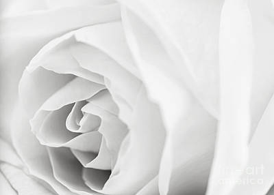White Rose Art Print by Elena Elisseeva