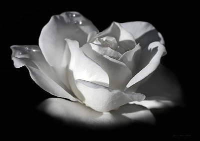 Photograph - White Rose Flower Glow by Jennie Marie Schell
