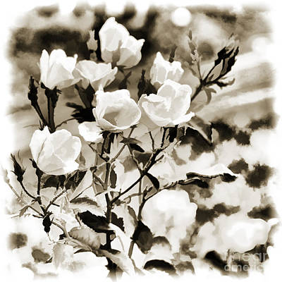 Painting - White Rose Flower In Black And White Sepia 3221.01 by M K Miller