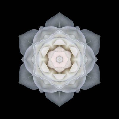 White Rose I Flower Mandala Art Print