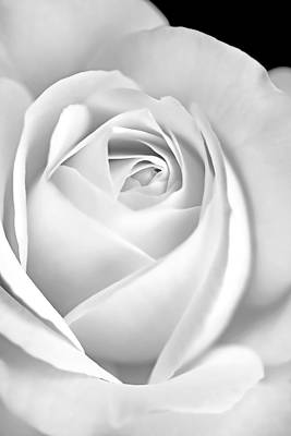 Photograph - White Rose In Black And White by Jennie Marie Schell