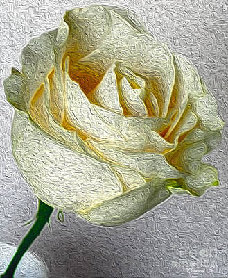 Art Print featuring the photograph White Rose In Oil Effect by Nina Silver