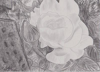 White Rose Original
