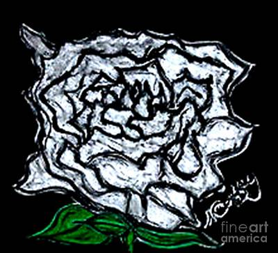 White Rose Print by Neil Stuart Coffey