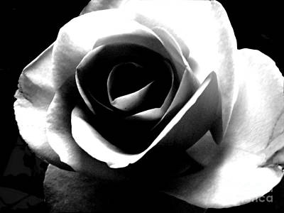 Photograph - White Rose by Nina Ficur Feenan