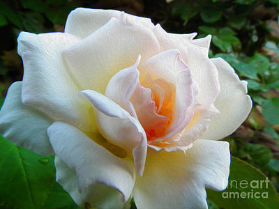 Photograph - White Rose Oleo by Stefano Piccini